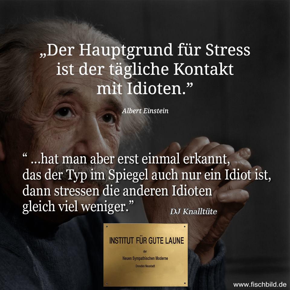 einstein hauptgrund für Stress ist der tägliche Kontakt mit Idioten